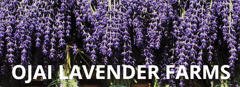 Absolutely The Best Lavender In The Ojai Valley